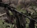 rot marsh 2